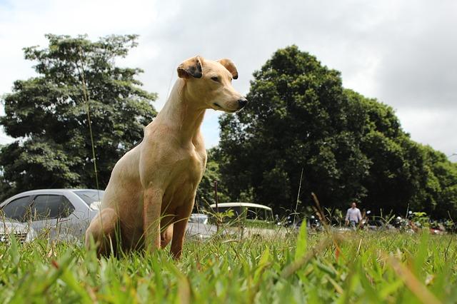 dog-1610325_640